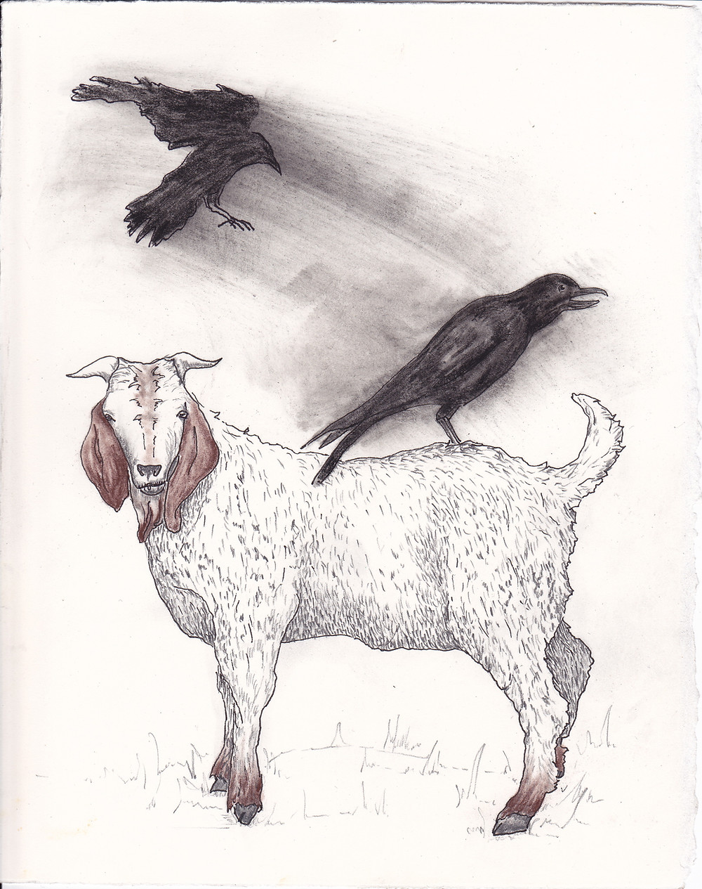 Goat and Crow.jpg