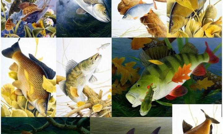 10 Freshwater Fish Notecards