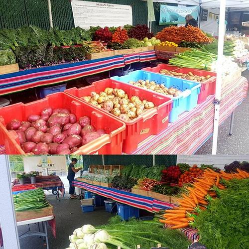 Squamish farmers market 10 to 3 _Mount P
