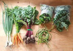 Week 10 of Spring CSA &_🥕 FARM STAND TH
