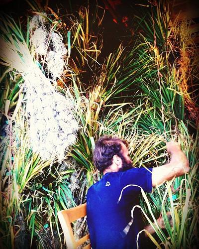 Garlic harvest has begun!