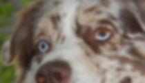 obi eyes.jpg