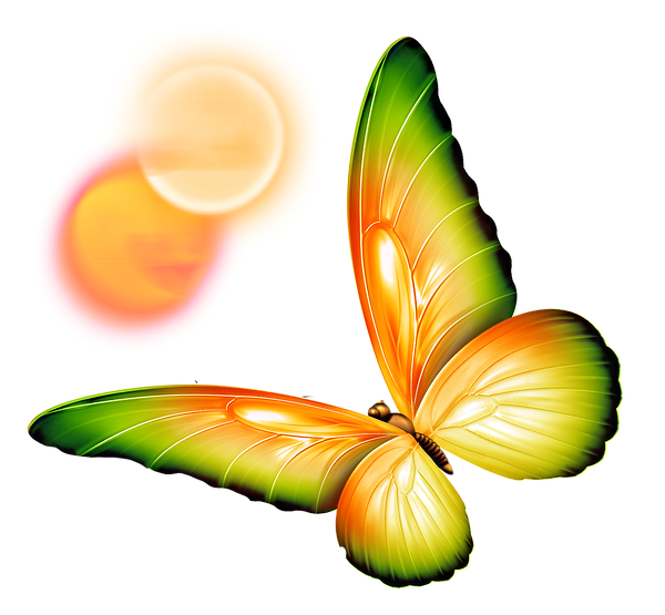 butterfly_edited_edited.png