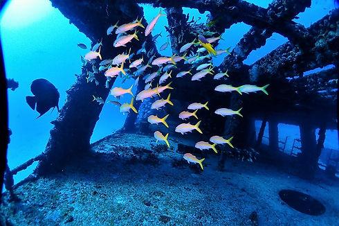 wreckfishinside.jpg