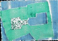 Monotype             28 x 19 cm        2019