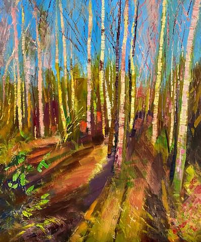Long-Shadows-Birch-Trees