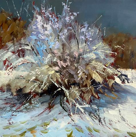 Hawthorn-Tree-Snow