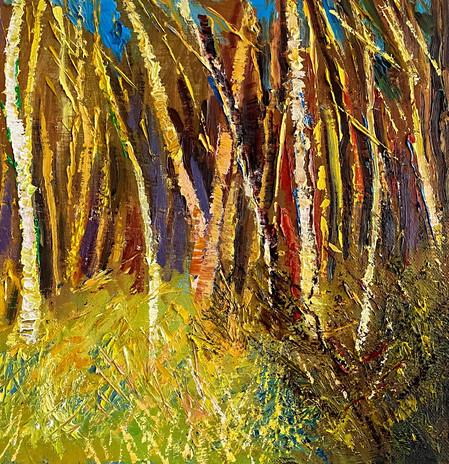 Birch-Trees-in-Sunlight