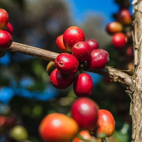 Алкоголь и кофе: новые точки пересечения