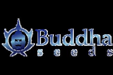 buddha-seeds-01.png