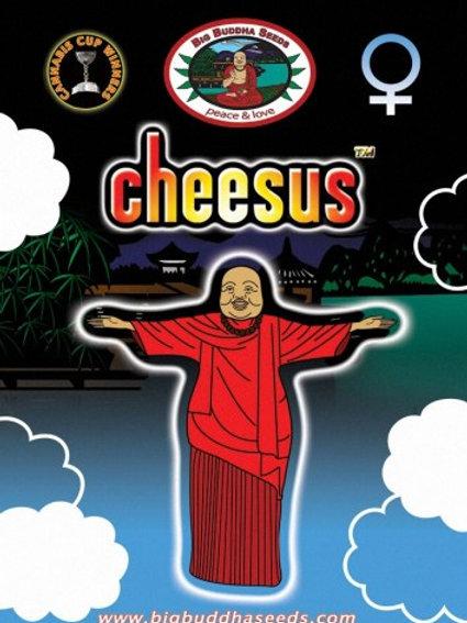 Big Buddha-Cheesus Feminized