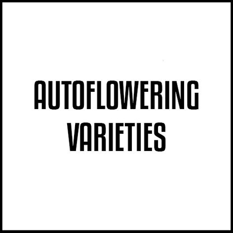 Autoflowering Varieties.png