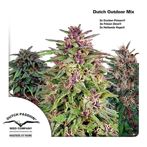 Dutch Passion Outdoor Mix