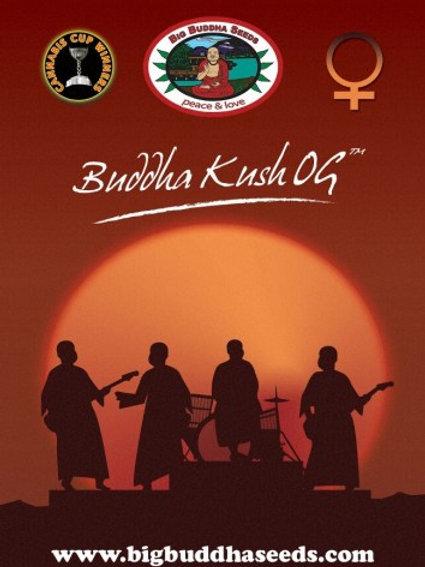 Big Buddha-Buddha Kush OG Feminized