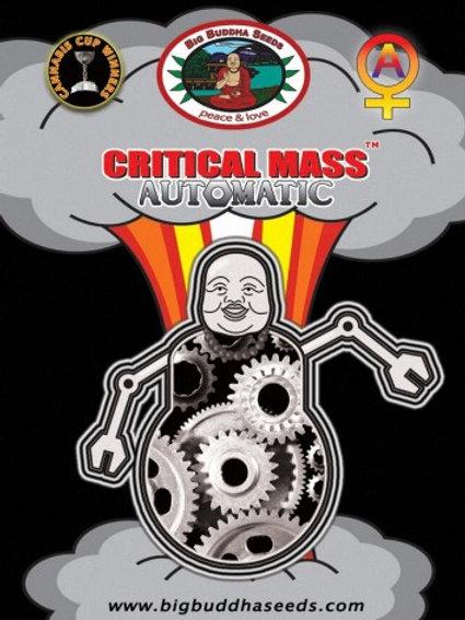 Big Buddha-Critical Mass Auto Feminized