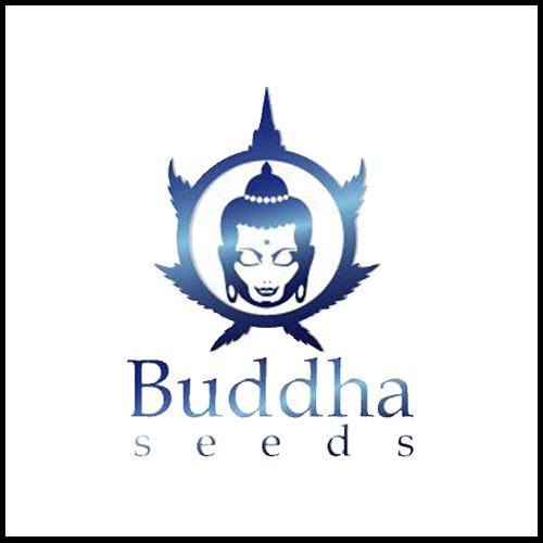 Buddha seeds.jpg