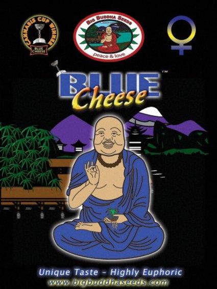 Big Buddha-Blue Cheese Feminized