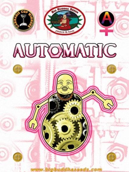 Big Buddha - Automatic Feminized