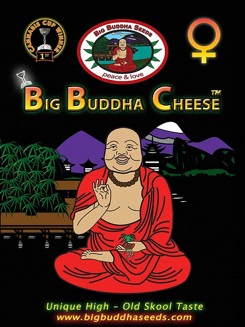 Big Buddha-Cheese Feminized