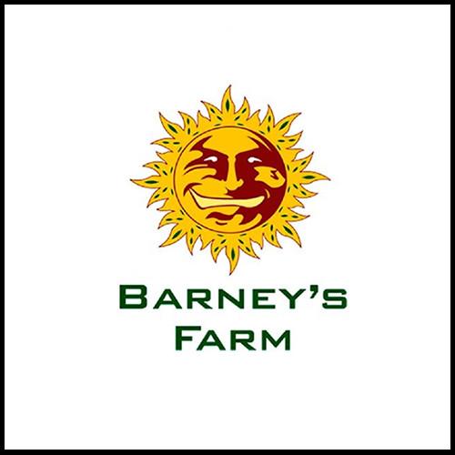 Barneys farm.jpg