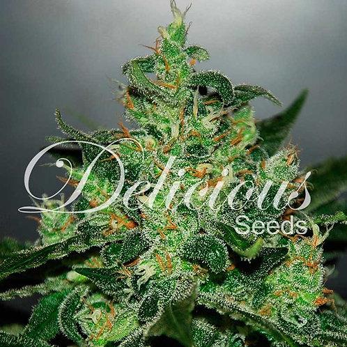 Delicious Seeds Critical Jack Auto