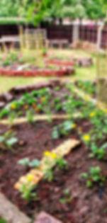 Garden in July 2020