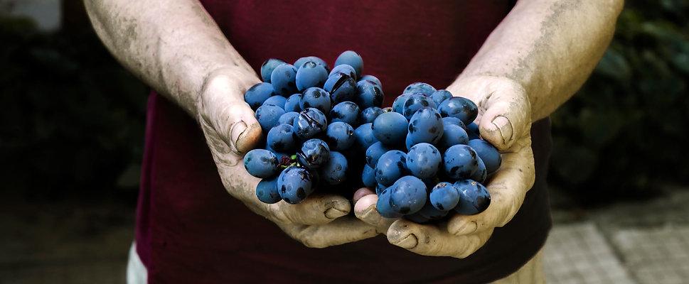 Grapes-web_edited.jpg