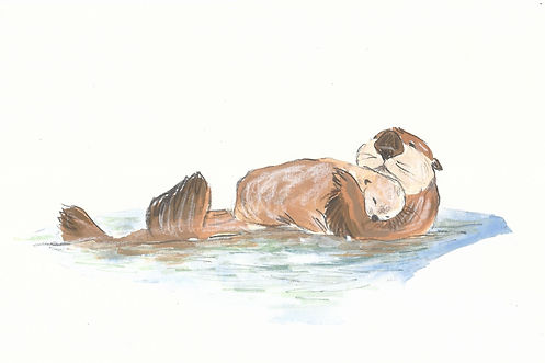 Otter 1 cropped.jpg