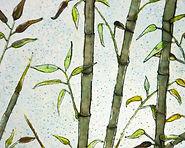 Jans bamboo-1 zoom in.jpg