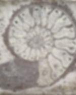 Grey Ammonite Splashback.jpg