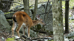 CWD — Know Your State's Rules