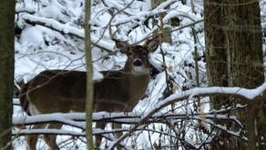 Hunting Season Is Also Wildlife Viewing Season