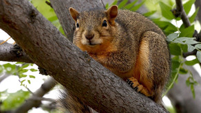 Everybody's Squirrels
