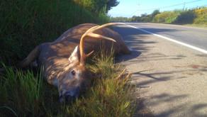 Deer Collisions — A Hunter's Perspective: 8 Reasons Why We Hit Deer