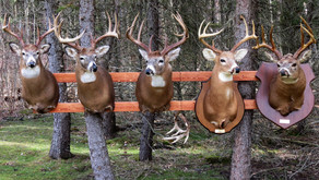 Deer Hunting's Best Values in the Northeast
