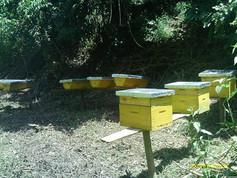 Bee hives.jpg