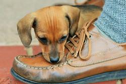 puppy-316076_1280