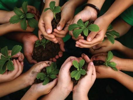 Ações sustentáveis no dia a dia ajudam a preservar o meio ambiente