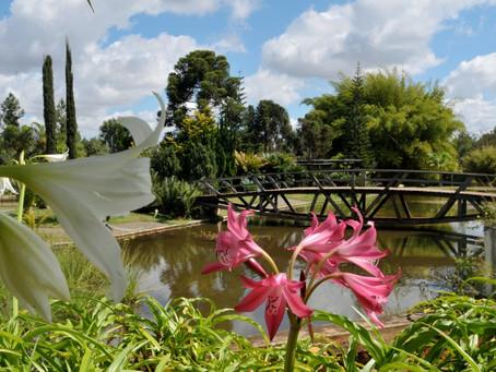 Dia do Meio Ambiente:Jardim Botânico de Brasília lança vídeos que mostram importância da preservação