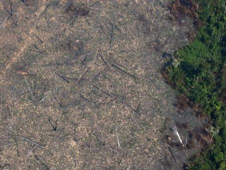 Brasil é o país que mais perdeu floresta na última década, aponta relatório da FAO