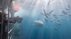 sharkpic2