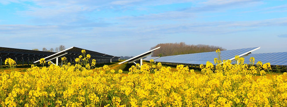 Solar panels on a solar farm