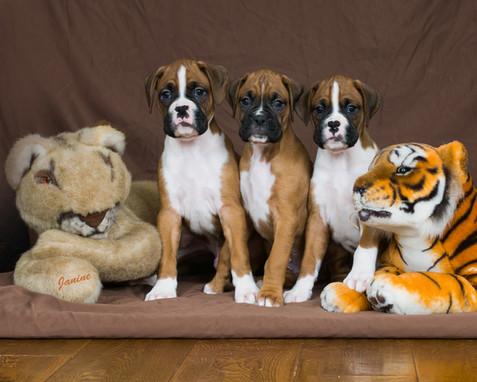 Lion & Tiger & Boys oh my!