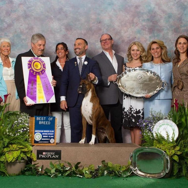 ABC Best of Breed 2016