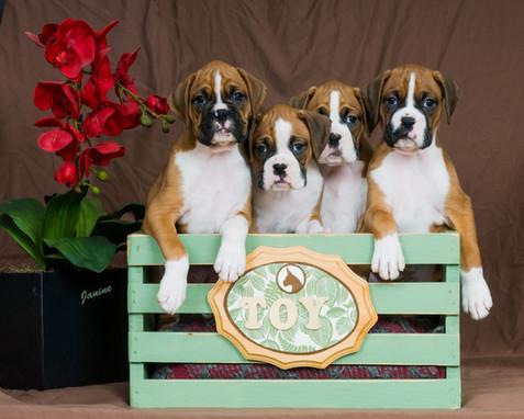 Boxer Baby Girls