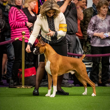 Romeo at Westminster