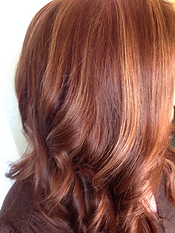Shiny, golden highlights with a rich chocolate base color and beautiful cut