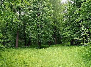ロシア 森林保全.jpg