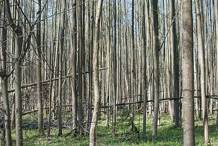 ロシア 森林2.jpg