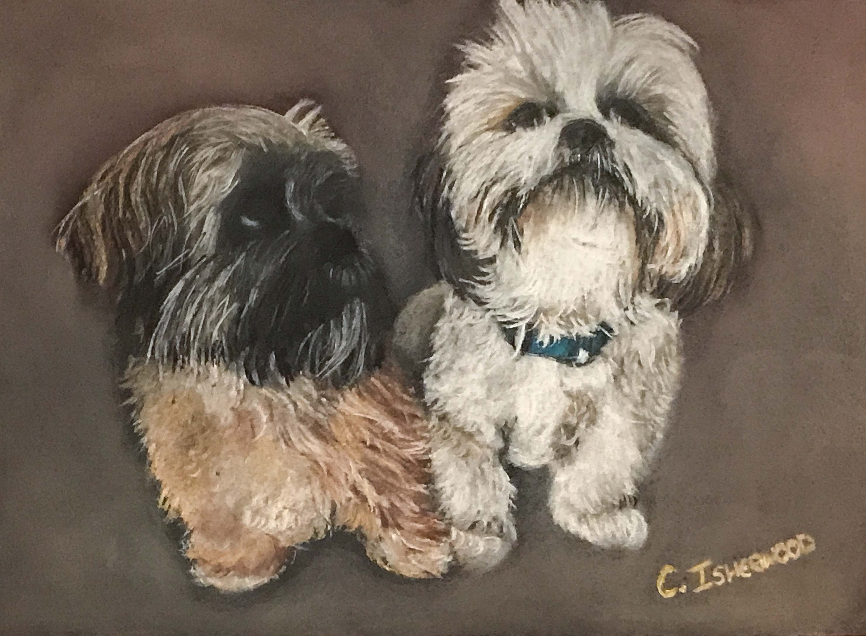 pair of dogs 2018